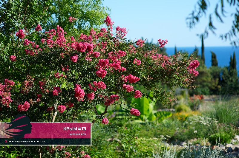 Ялта никитский ботанический сад